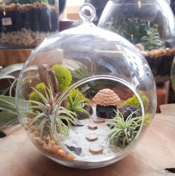 air plant terrarium kit diy miniature landscape featuring a. Black Bedroom Furniture Sets. Home Design Ideas