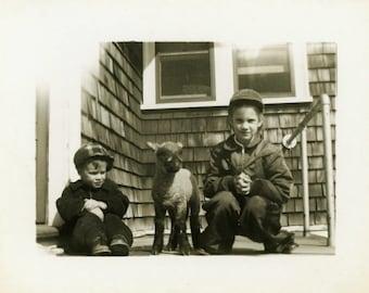 "Vintage Photo ""The Third Sibling"" Baby Sheep Lamb Snapshot Photo Old Antique Photo Black & White Photograph Found Photo Paper Ephemera - 164"