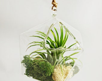 Geometric Air Plant Terrarium Ornament // Medium