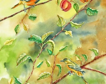 Baltimore Oriole Birds Original Watercolor Painting, matted to 16x20,  Apple Tree, Orange, Green, Brown, Red