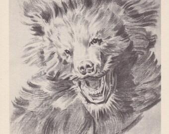"""Ian Feit """"Bear head"""" Postcard -- 1956"""