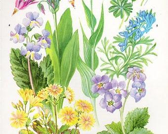 Botanical WILD FLOWERS HERBS Flower Print 45 Flower medium artwork plants print Cottage Decor Wildflower Vintage Botanical Print 1960s