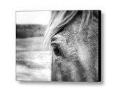 Horse Portrait Closeup with Soft Focus Equine Equestrian Art Black and White Fine Art Photography on Giclee Gallery Wrap Canvas