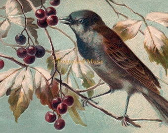 Bird With Red Berries - New 4x6 Photo Print From A Vintage Postcard FN004