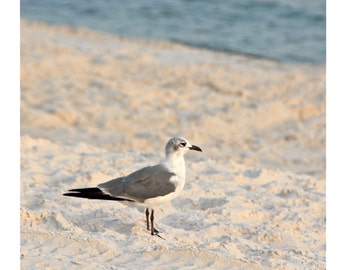 Seagull Photo - Beach Photography - Gulf Coast - Water Bird on Sand - theRDBcollection - Renee Dent Blankenship