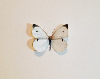 Hand Painted Cabbage White Butterfly Specimen