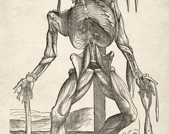 "Andreas Vesalius : ""Skeletal Figure Hanging from a Noose"" (1543) - Giclee Fine Art Print"