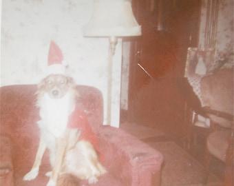 Weird 1971 Santa's Little Helper Christmas Dog Snapshot Photograph - Free Shipping