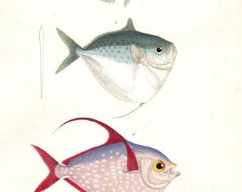 1836 Antique Fish Print Moonfish Lampris Nautical Art Folio Lithograph Pl 57