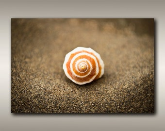 Vancouver Island Beach Photography - Large Poster Size Seashell Prints by Robbie Stroud