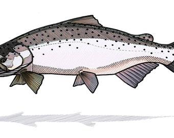Chinook Salmon Print