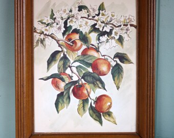 Framed Water Color Botanical Print Persimmon Signed L. Giron