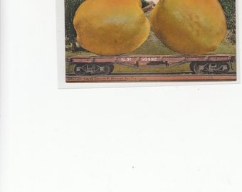 Antique Postcard Exaggerated Railroad Car Of Bellflower Apples