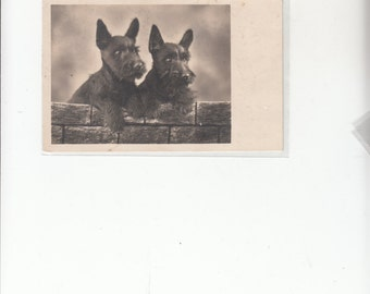 Two Sweet Scottie Dog Scottish Terriers Antique Postcard