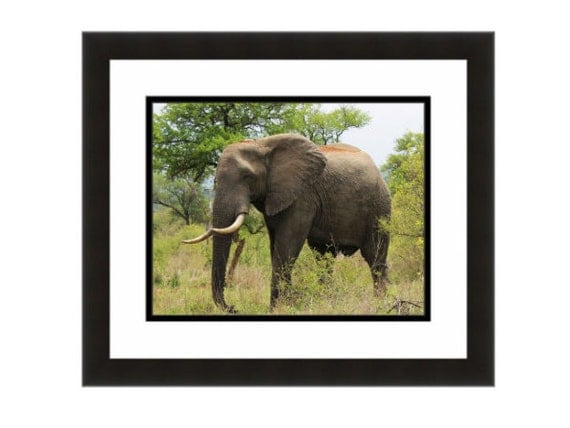 Items similar to wildlife decor elephant photograph African elephant home decor