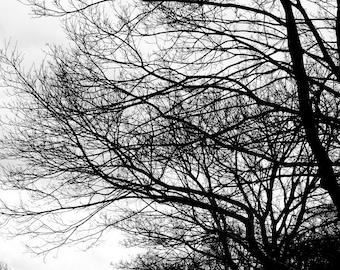 Tree art, tree photo, tree print, tree photography, black and white, tree silhouette, tree picture, tree wall art, free shipping, home decor