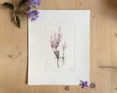 Heather Drypoint Etching - Original Botanical Print