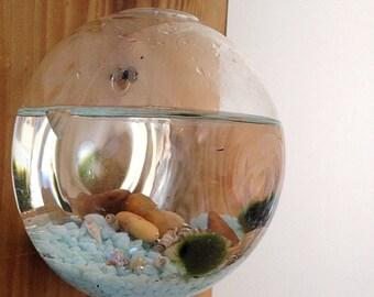 Marimo moss ball/terrarium/aquatic plant/rustic barn wood/hanging terrarium/seashells/burnt wood/torched wood