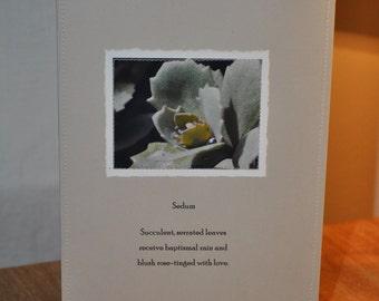sedum Paper Stitches notecard