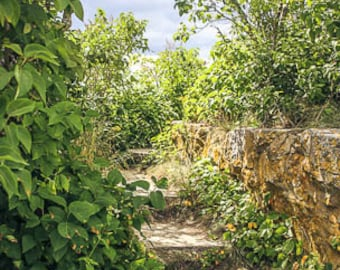An Overgrown Garden Path in Popham Maine, Photography, Fine Art Print, FREE SHIPPING