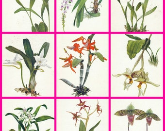 Set  of 15, Soviet  Postcards,  Orchids, Artist Shipilenko, Fine art, Printed in Moscow, 1988