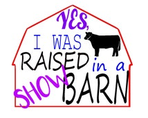 Raised in a show barn- Steer