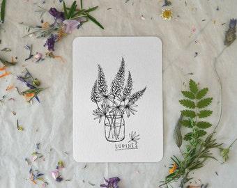 Lupine - Card