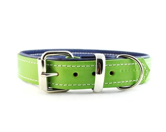 Apple Green on Navy Blue - Padded Leather Buckle Collar - Handmade to Order