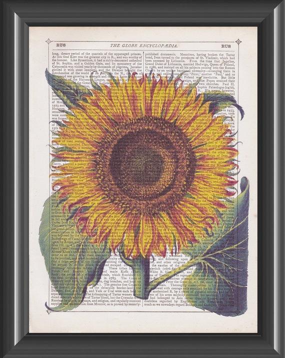 Vintage Sunflower Wall Decor : Vintage sunflower print basilius besler dictionary art home