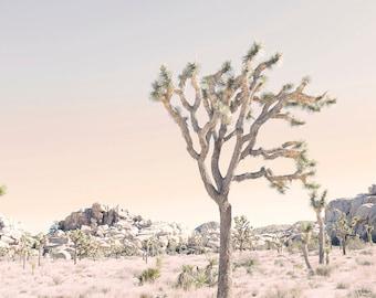 Joshua Tree, Desert Print, Desert Art, Joshua Tree Photo, Joshua Tree Print, Joshua Tree Photography, Desert Art, Cactus Print, JT #3