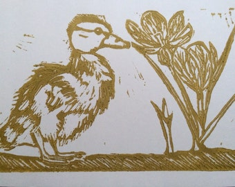 Duckling and crocus