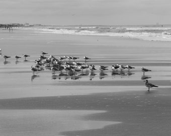 Birds on Cocoa Beach, Florida, Print, Travel Photography, Black and White