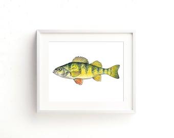 Yellow Perch Watercolor Fine Art Print