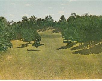 Shortsville, NY - Winged Pheasant Gold Club - Postcard