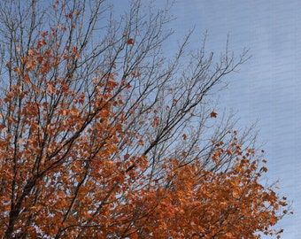 Fall Autumn Leaves - Photograph Print Decor