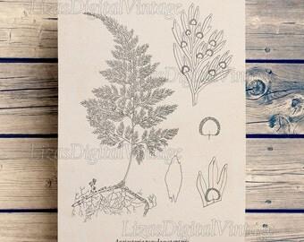 Wall art decor, Printable downloads, Botanical print, Vintage art, Antique illustration, Fern art print, Digital print, Fern poster, JPG PNG