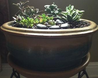 Large Tabletop Succulent Garden