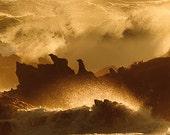 Sea Lions, Sunset, Nature...