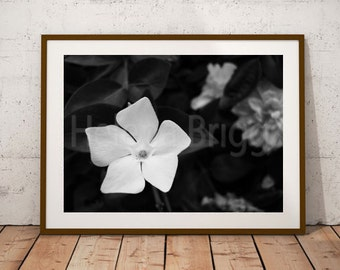 White Flowers, White Wall Art, White Wall Decor, White Prints, White Photography, White Pictures, White Art, White Artwork, White Decor