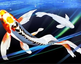Twilight Doitsu Blue Kujaku Koi Fish Pond Digital Art Giclee Painting Print