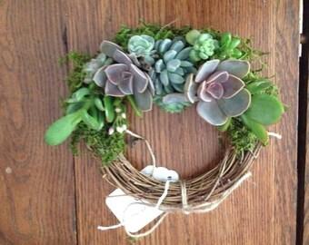 "6"" succulent wreath.. sunshine"