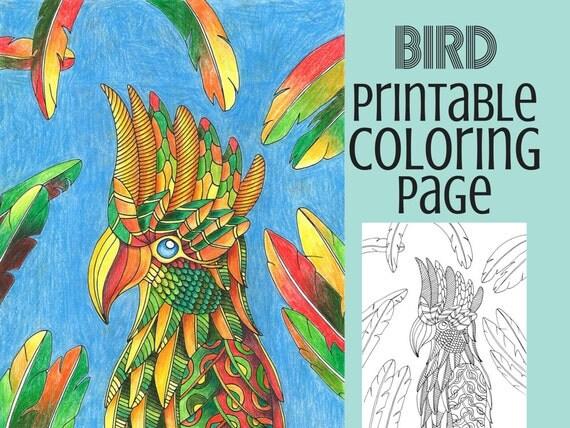 bird coloring pages rspb shop - photo#20