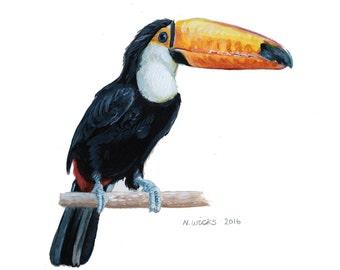 Toucan Original Painting