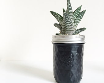 High gloss black diamond quilted ball mason jar with succulent plant. Home decor, office decor, house plant, uk seller.