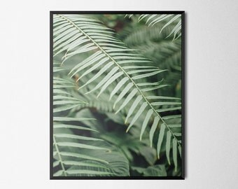 Tropical Leaf Fronds Photography | Giclée Art Print