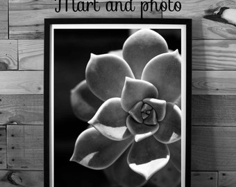 Flower photography, black and white photography, nature photography, macro photography, instant download, printable art, home decor