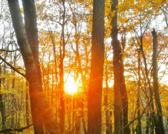Sunset photo, fall foliage photo - orange trees photo, nature photography, tree photography