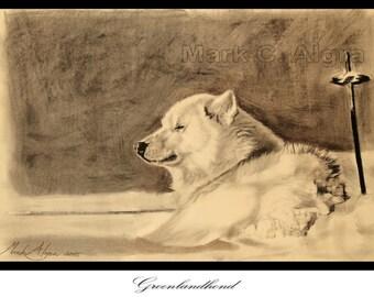 Drawing of Greenland Dog