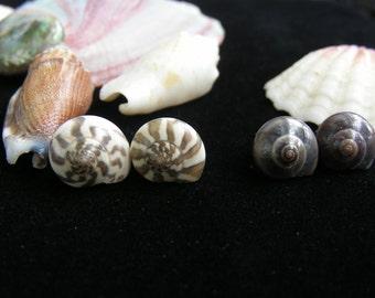 Pinwheel Sea Shell Earrings, Shell Earrings, Post Earrings, Sea Shell Post Earrings, Natural Earrings, Hand Made Earrings, Earrings