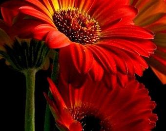 Nature Photos-5 individual photos